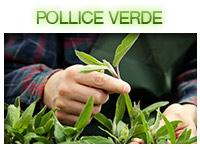 polliceverde-dx-2